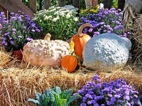 Осенний сад фото 1