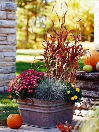 Осенний сад в цветах фото 3