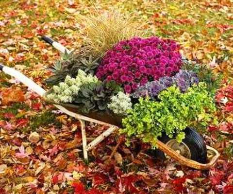 Фото 2. Цветы в саду