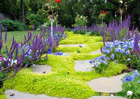 Мшанка шиловидная - уход в саду