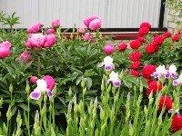 Каталог растений. Фото2