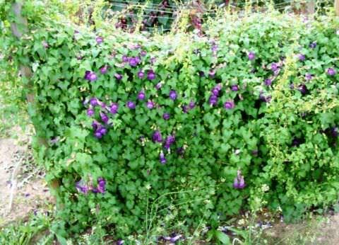 Какие цветы сажать на рассаду в марте название фото и