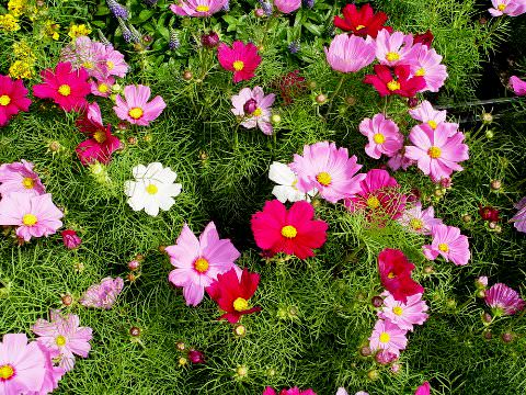 Фото долгоцветущих многолетних цветов