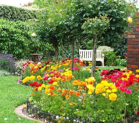 Садовый лютик