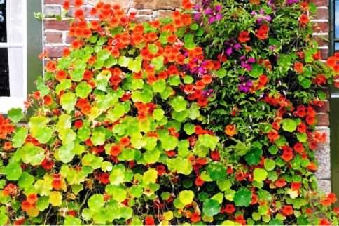 Садовый цветочный дизайн