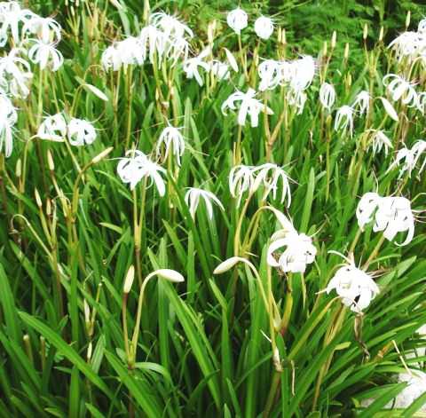 Водная лилия фото