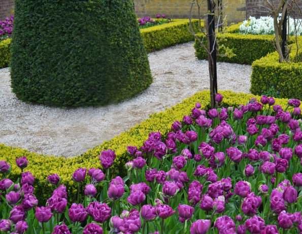 Сад тюльпанов Кекенхоф фото 1
