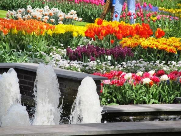 Королевский парк цветов Кекенхоф 2015