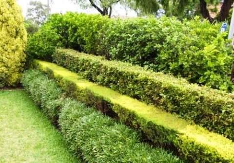 Живая изгородь в несколько ярусов