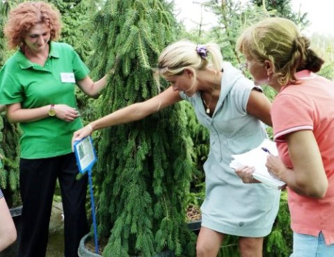 Проверяйте садовые растения перед покупкой очень тщательно