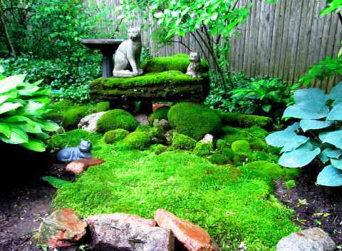 Как вырастить мох в саду