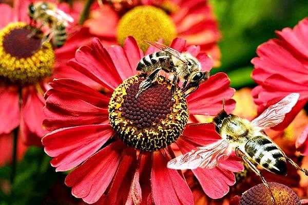 Пчеловодство на участке, виды пчел и их влияние на здоровье и плодоношение растений