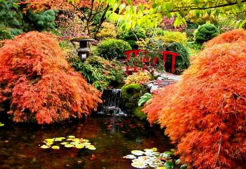 Фото Сады в Канаде. Японский парк
