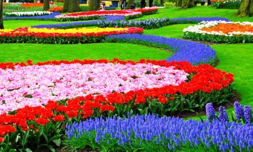 Парк цветов кёкенхоф фото 1
