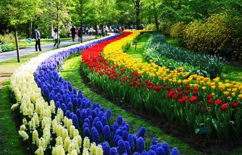Дорожки из тюльпанов
