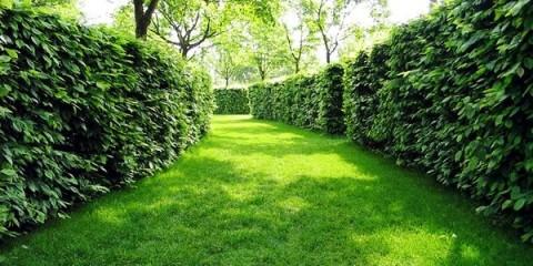 Живая изгородь - непременный атрибут