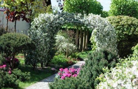 Живые арки фото