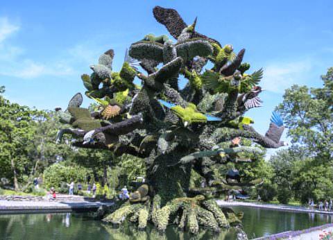 Дерево птиц