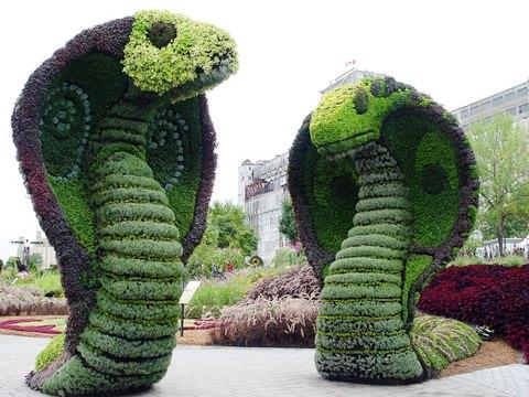 Змеи из цветов