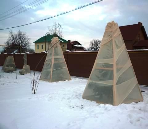 Укрытие топиари на зиму