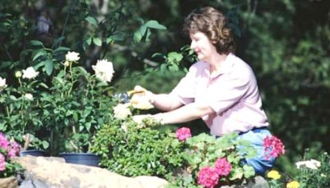How to properly care for the garden.  Plant rejuvenation
