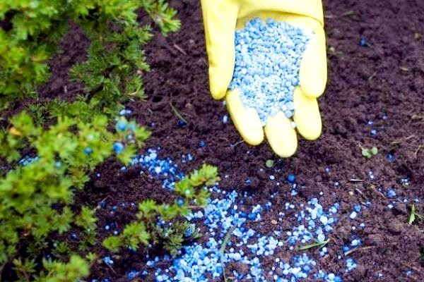 удобрения для садовых растений
