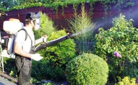 Опрыскиваем растения, боремся с вредителями