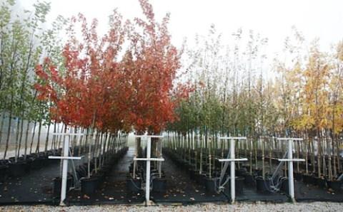 Весенние посадки деревьев