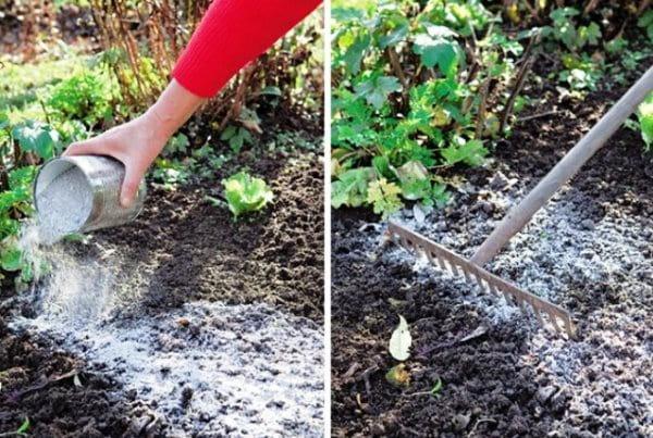 Древесная зола как удобрение для растений – состав, применение и польза